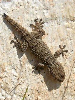 Gecko, Dragon, Reptile, Texture, Lizard