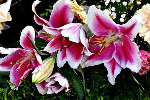 Orchids, Flowers, Nature, Violet, Blossom, Bloom, Plant