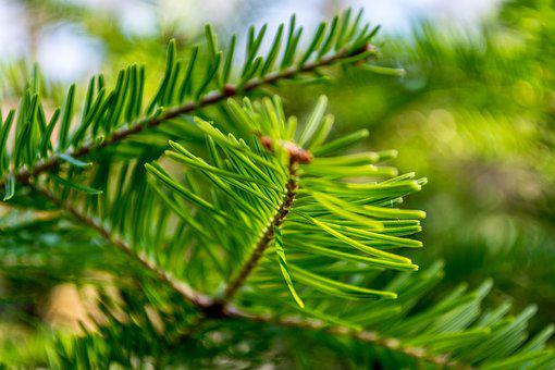 Green, Tree, Foliage, Dry, Nature, Forest, Landscape