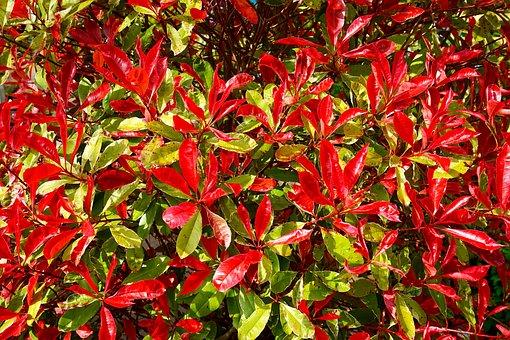 Red, Fresh, Color, Green, Nature, Foliage, Season