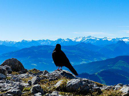 Jackdaw, View, Landscape, Freedom, Distant View, Nature