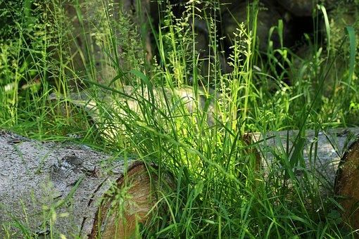 Grass, Nature, Green, Grasses, Plant, Blade Of Grass