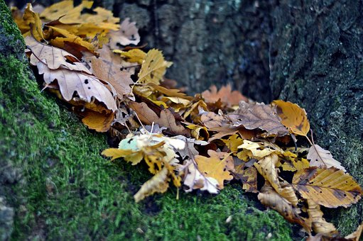 Leaf, Autumn, Forest, Nature, Country, Trees, Branch