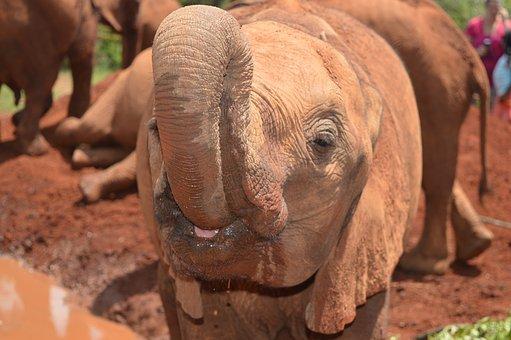 Elephant, Nature, Safari, Africa, Mammal, African