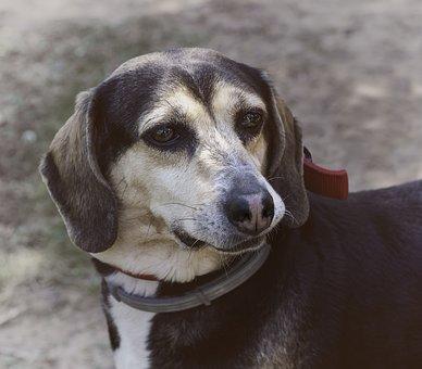 Dog, Animal, Animals, Pet, Bitch, Friend, Animal Abuse