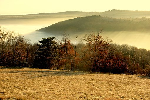 Fog, Valle, Forest, Prato, Nature, Colors, Winter
