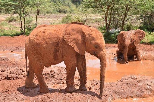 Baby Elephant, Africa, Safari, Baby, Elephant, Wildlife