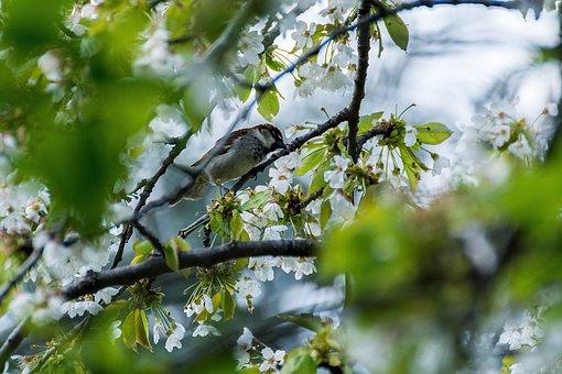 Bird, Sparrow, Young, Close, Plumage, Sparrows