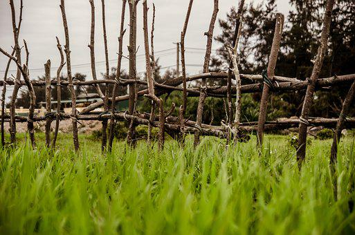 Rice Field, The Fence, Green, Neck, Silk, Wood, Co, Pm