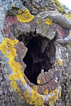 Tree Cave, Tree, Tribe, Bark, Cave, Fruit Tree, Log