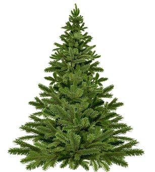 Christmas Tree, Christmas Tree Christmas, Christmas