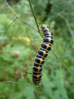 Nature, Caterpillar, Insect, Animal, Pest, Closeup