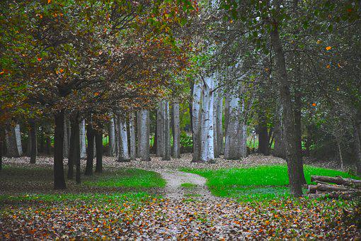 Forest, Trail, Autumn, Plants, Dried Leaves, Viale