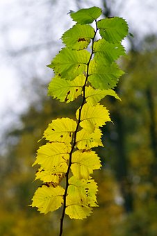 Foliage, Yellow, Branch, Sprig, Tree, Forest, Park