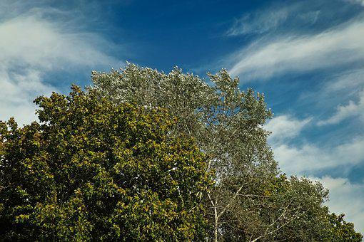 Trees, Forest, Nature, Landscape, Clouds, Sky, Forests