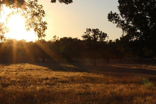 Dehesa, Oak Trees, Sunset, Grass, Dry Grass, Vegetation