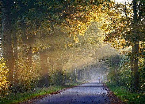 Autumn, Fog, Jog, Oak, Forest Path, Haze, Morning