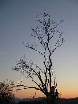 Tree, Sunset, Landscape, Silhouette, Branches