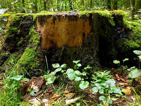 Tree Stump, Tree, Forest, Log, Wood, Sawed Off, Old