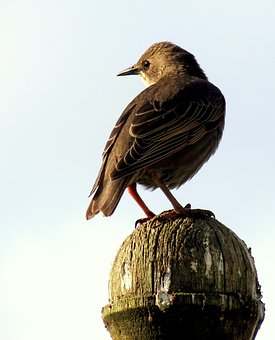 Starling, Bird, Animal, Nature, Beak, Green, Songbird