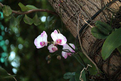 Orchid, Tree, Flower, Spring, Blossom, Bloom, Nature