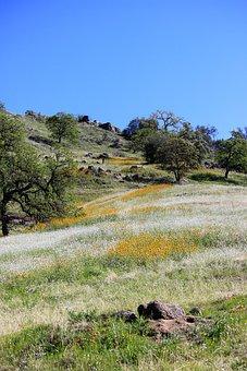 Wildflowers, Blue Sky, Oak, Sky, Nature, Landscape
