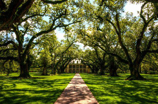 Oak Alley Plantation, Usa, America, Plantation, Tree
