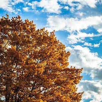 Autumn, Oak, Sky, Weather, Oak Leaves, Fall Foliage