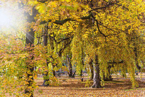 Autumn, Landscape, Park, The Sun, Foliage, Nature