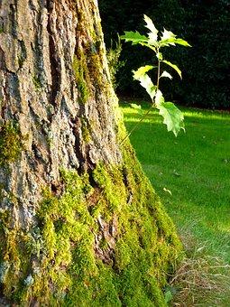 Tree, Oak, Park, Nature, Bark, Tribe, Landscape