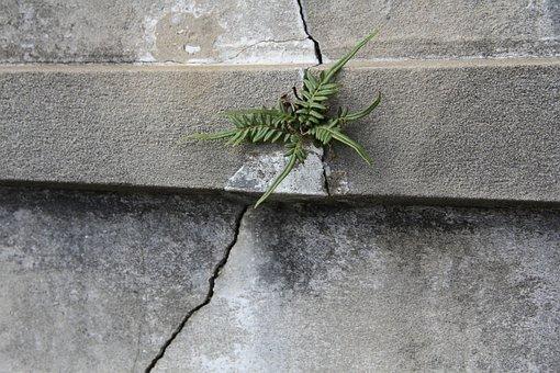 New Orleans, Nola, Fern, Plant, Tomb, Crack, Stone