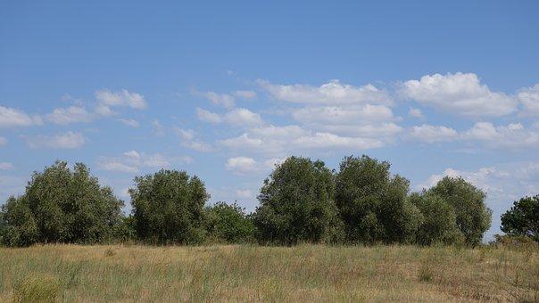 Stone Oak, Tree, Quercus Ilex, Mediterranean, Plant