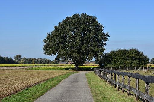 Tree, Field, Road, Nature, Oak, Blue Sky