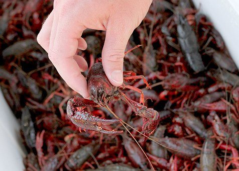 South, Crawfish, Red, Seafood, Crayfish, Dinner, Food