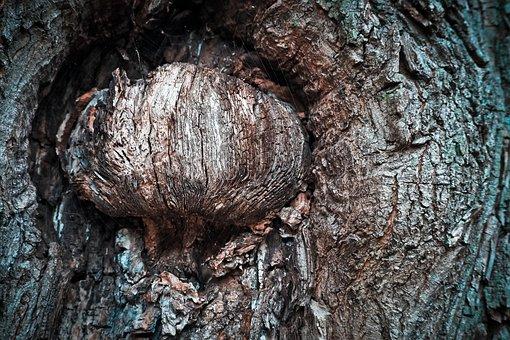 Tree, Bark, Log, Nature, Forest, Wood, Structure, Oak