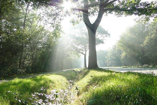 Foggy, Sun, Sun Rays, Morning, Heavenly, Beauty, Luck