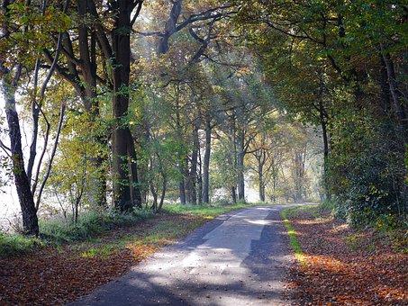 Forest Path, Autumn, Haze, Sunbeam, Incidence Of Light