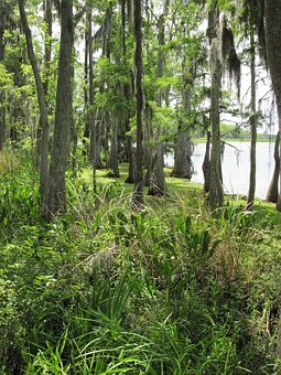 Marshland, Swamp, Marsh, Louisiana, Wetlands, Trees