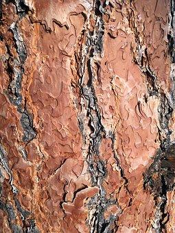 Texture, Wood, Old, Wood Grain, Wood Texture, Grain