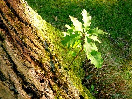 Tree, Oak, Park, Nature, Out, Tree Bark, Log, Landscape