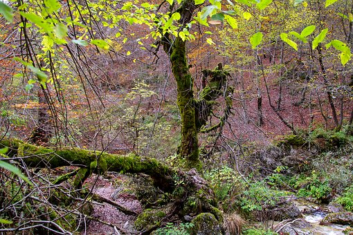 Forest, Mountain, Tree, Branches, Broken Branches, Moss