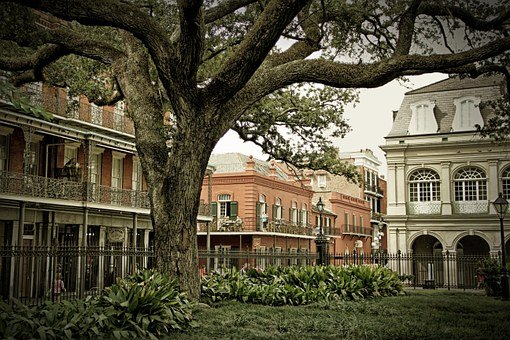 French Quarter, New Orleans, Tree, America, Park