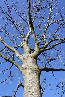 Tree, Oak, Nature, Blue, Sky, Season, Sunny, Outdoors