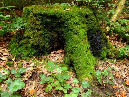 Tree Stump, Tree, Forest, Log, Wood, Nature, Sawed Off