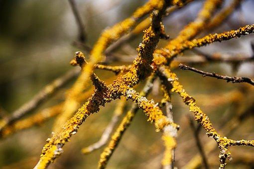 Old Tree, Yellow, Tree, Natural, Nature, Sun, Foliage