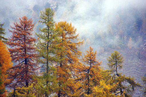 Forest, Larch, Autumn, Yellow, Tree, Trees, Alps