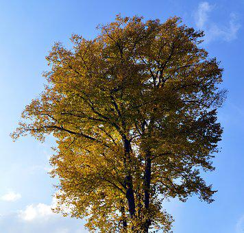 Deciduous Tree, Leaves, Color, Tribe, Road, Bark