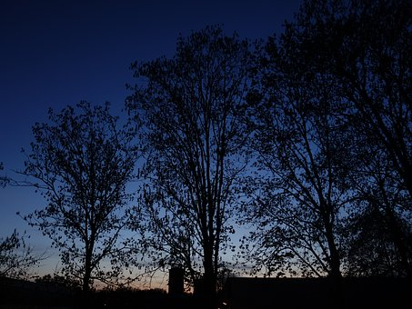 Trees, Twilight, Silhouette, Aesthetic, Branches