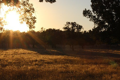 Dehesa, Oak Trees, Sunset, Grass, Dry Grass, Vegetation