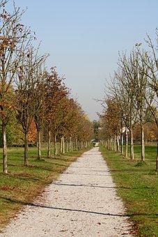 Viale, Autumn, Park, Trees, Leaves, Dried Leaves